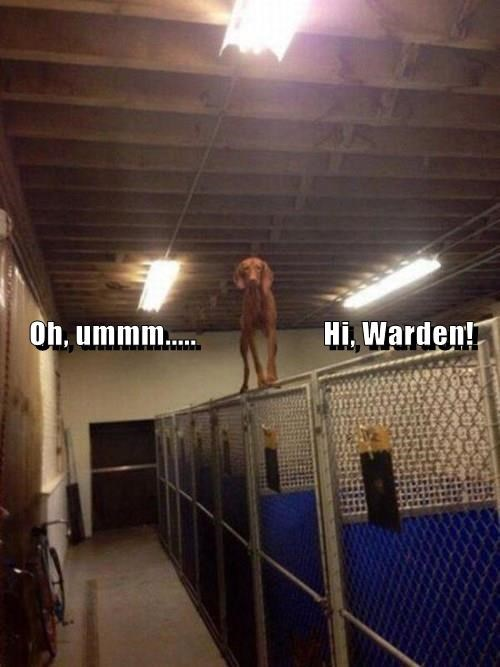 Technically I'm Still in My Kennel