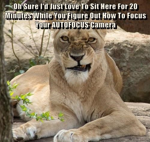 Oh Sure I'd Just Love To Sit Here For 20 Minutes While You Figure Out How To Focus Your AUTOFOCUS Camera