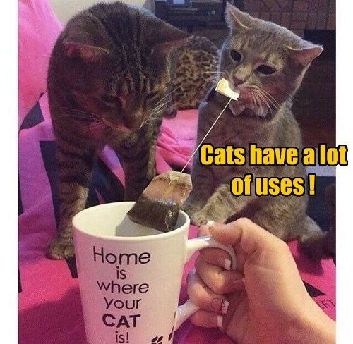 Cats have a lot of uses !