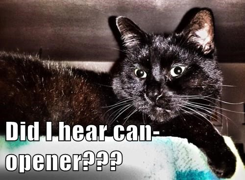 Did I hear can-opener???