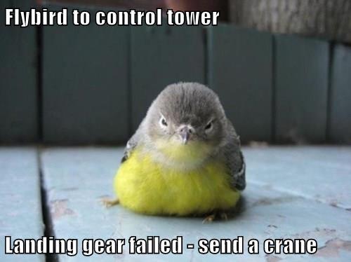 landing,FAIL,birds,grumpy