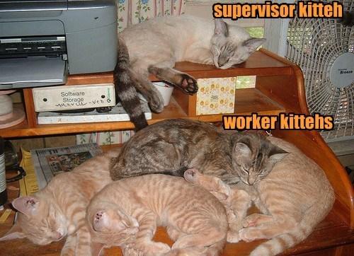 supervisor kitteh      worker kittehs