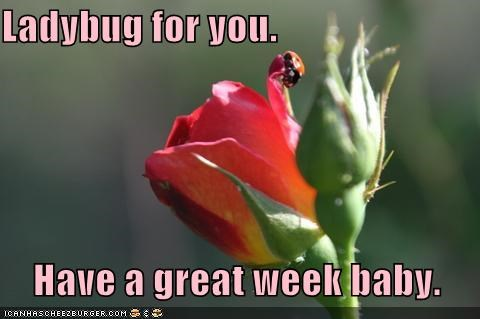 Ladybug for you.      Have a great week baby.