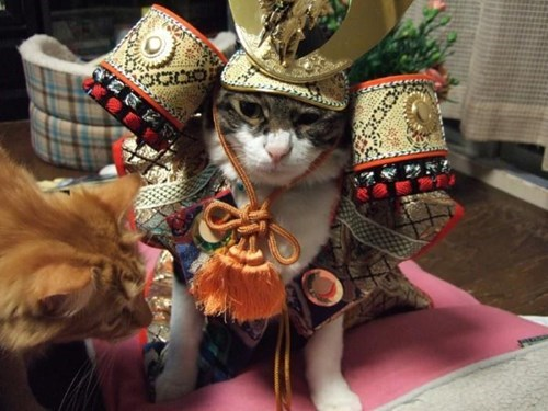 Send Us A Picture of your Pet for National Dress Up Your Pet Day!