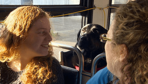 Seattle Dog Has No Need for Humans, Takes City Bus to Dog Park Every Day