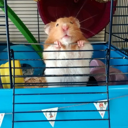 cute,hamster,working out