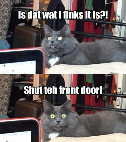 Kittie is SHOCKED!