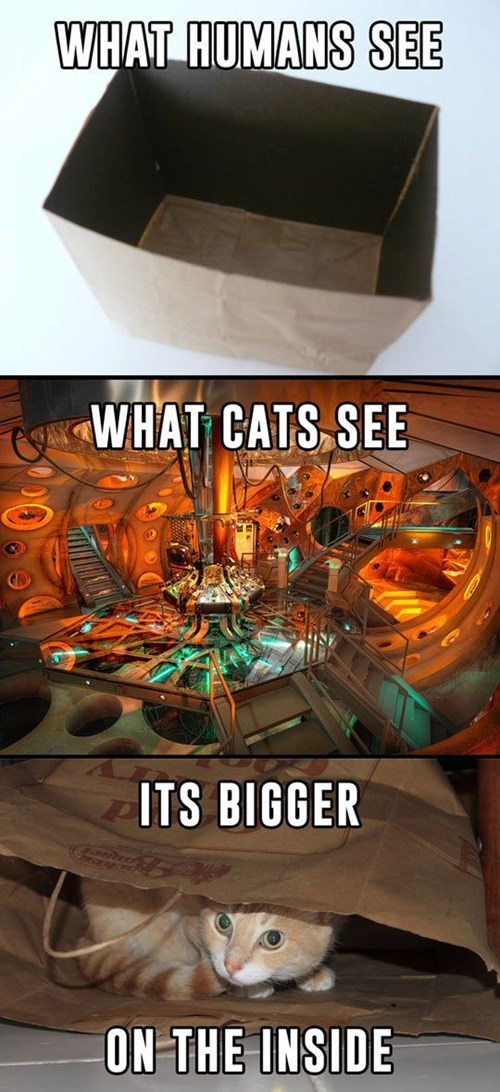 bag,tardis,bigger on the inside,Cats