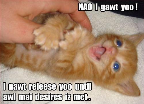 tabby,kitten,forever home,Cats
