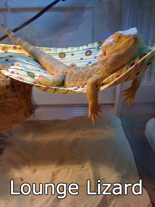 Human, Do Bring Me a Plate of Delicious Crickets