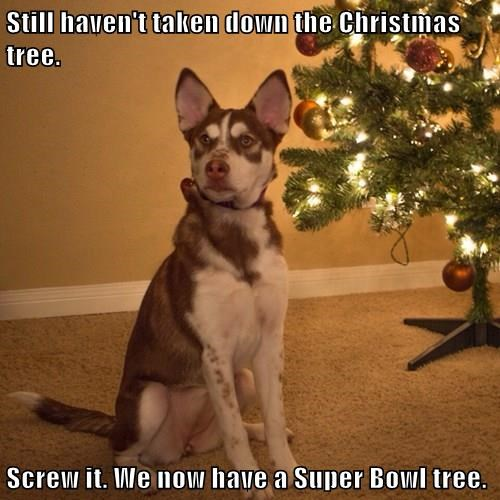 christmas,dogs,super bowl