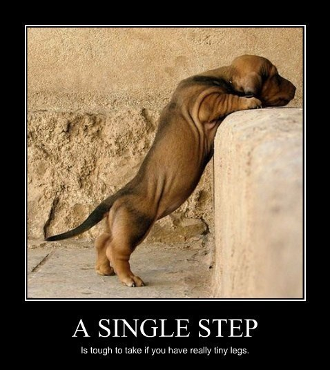 step,dogs,tiny,cute,funny