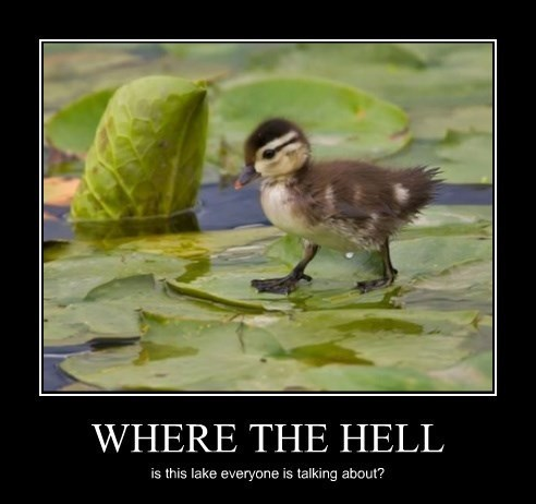 duck,idiots,leaves,lake,funny