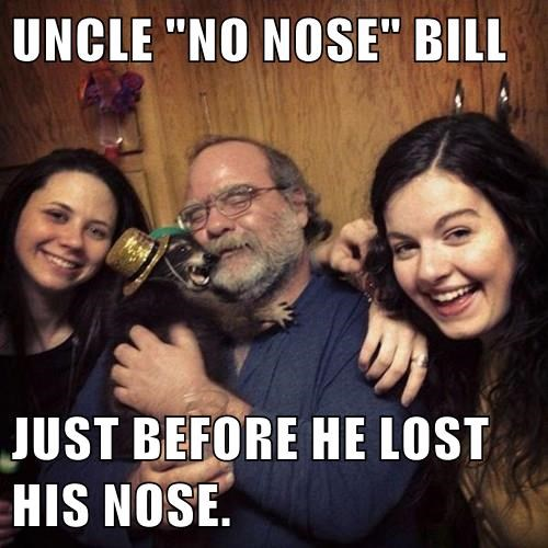 attack,raccoon,nose,picture,family
