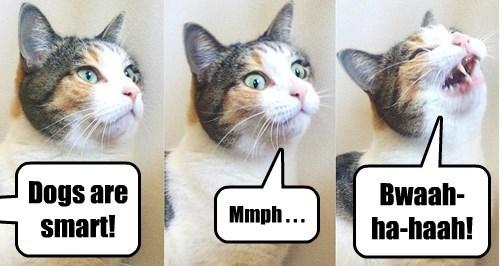 Cats,joke,stupid,rude