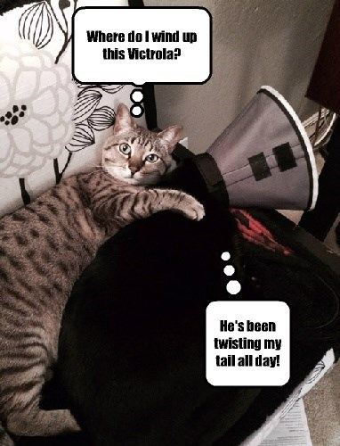 Ever since I brought my cat home from the vet...