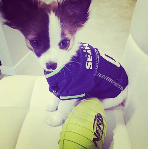 seattle seahawks,dogs,sports,nfl,puppy,puns,cute,football