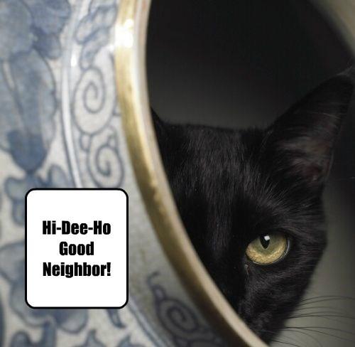 Home Improvement Cat