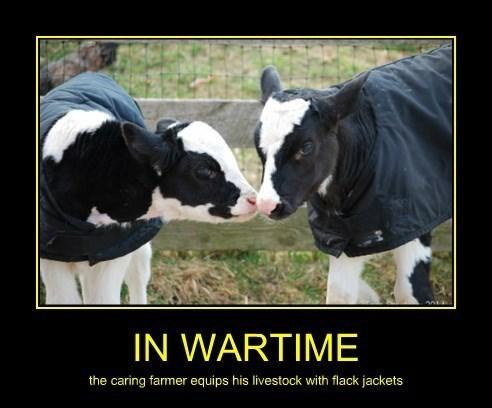 bulletproof,cows,funny,war