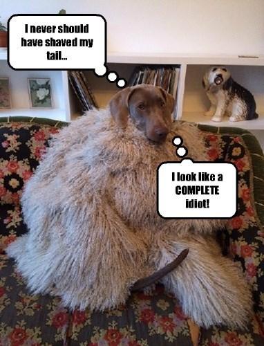 fur,dogs,tail,dare