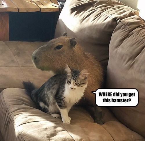 WHERE did you get this hamster?