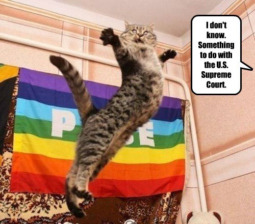 Cats Love Equality as Long as it Doesn't Involve Dogs