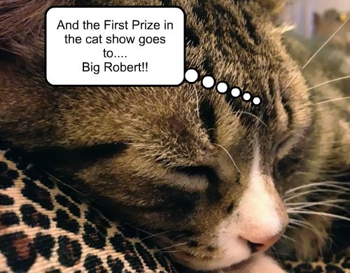 And the First Prize in the cat show goes to.... Big Robert!!