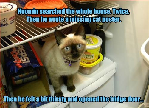Hoomin searched the whole house. Twice.  Then he wrote a missing cat poster.           Then he felt a bit thirsty and opened the fridge door...