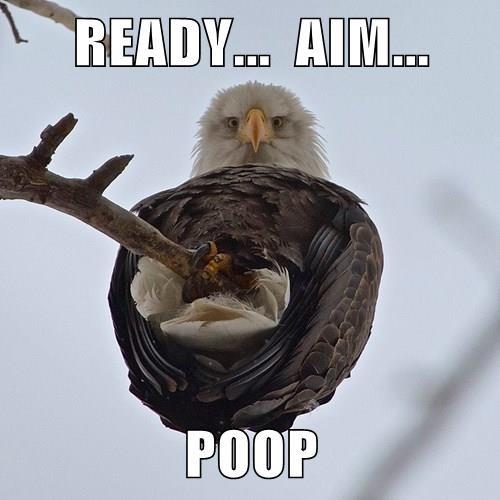READY...  AIM...  POOP