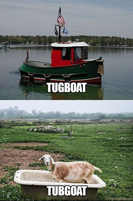 goats,I see what you did there,boat,wordplay