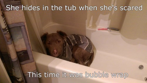 During Bath Time, There is No Safe Haven