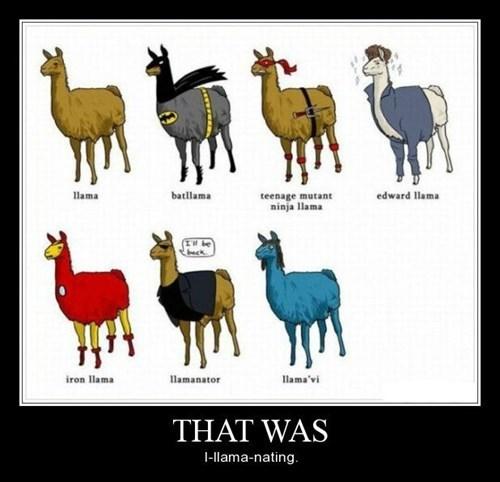 Damn Llamas