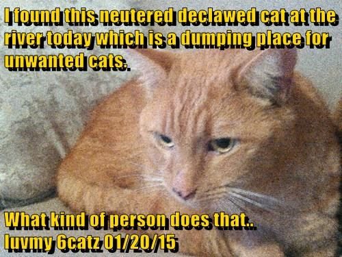 I found this neutered declawed cat at the river today which is a dumping place for unwanted cats.  What kind of person does that..                luvmy 6catz 01/20/15