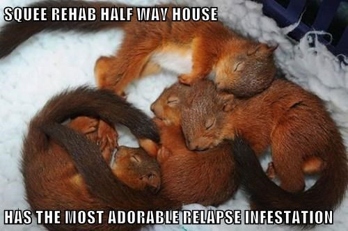baby animals,squee,rehab