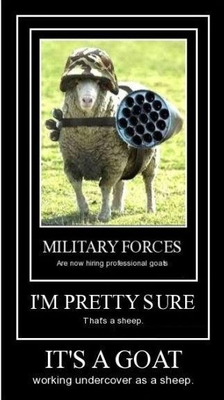 war,goats,sheep,funny