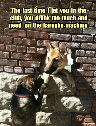dogs,club,pee,karaoke