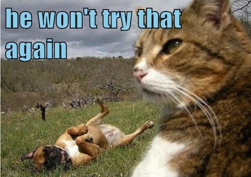 warrior,Battle,dogs,Cats