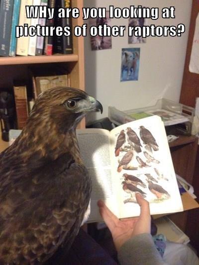caught,hawk,Raptor,cheating