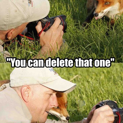 Foxes these days