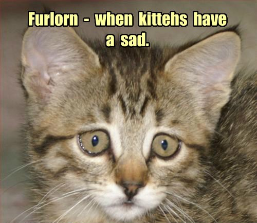Furlorn  -  when  kittehs  have  a  sad.