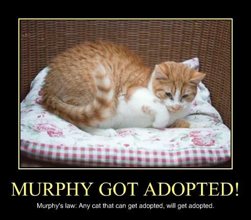 MURPHY GOT ADOPTED!