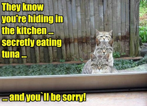 They know  you're hiding in the kitchen ... secretly eating tuna ...