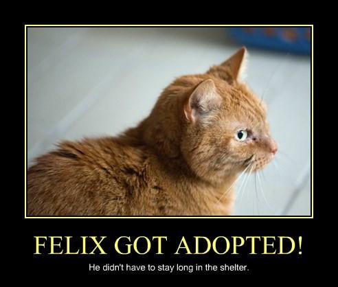 FELIX GOT ADOPTED!