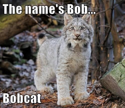 The name's Bob...  Bobcat