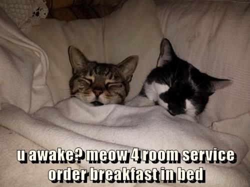 u awake? meow 4 room service order breakfast in bed
