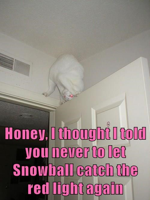 Honey, I thought I told you never to let Snowball catch the red light again