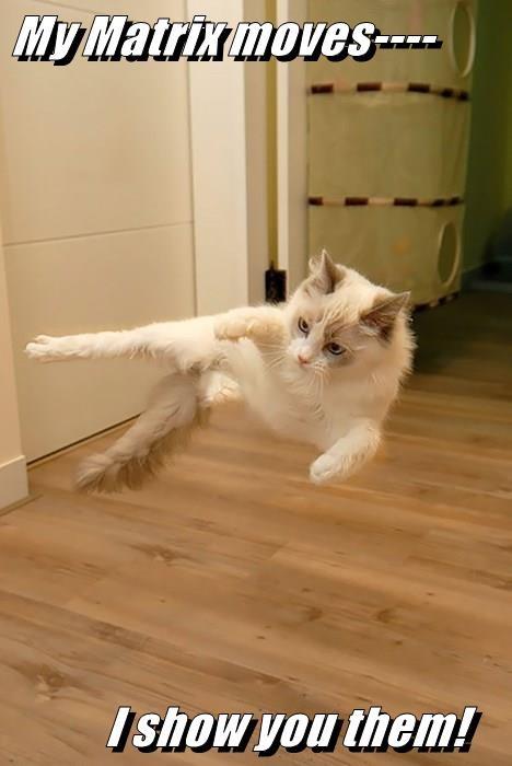 My Matrix moves----        I show you them!