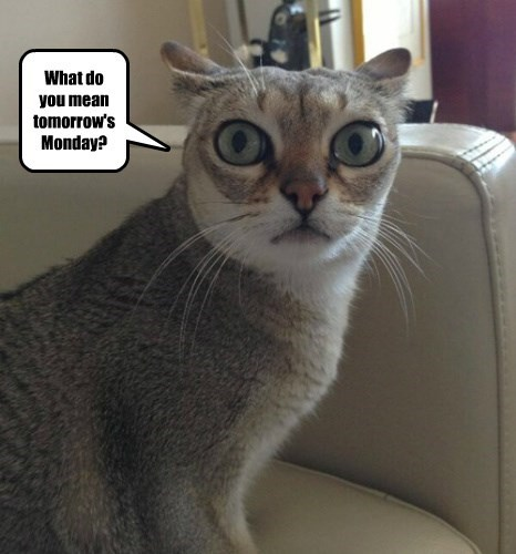 What do you mean tomorrow's Monday?