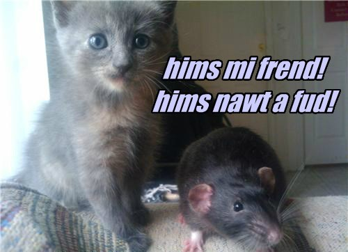 hims mi frend! hims nawt a fud!