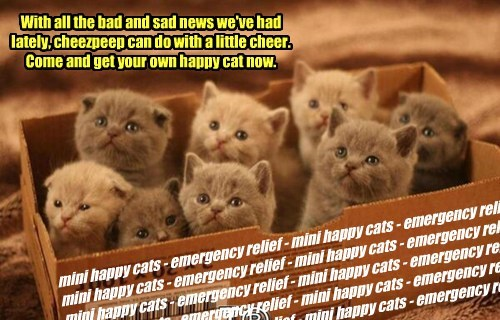 mini happy cats - emergency relief - mini happy cats - emergency relief - mini happy cats - emergency relief - mini happy cats - emergency relief - mini happy cats - emergency relief - mini happy cats - emergency relief - mini happy cats - emergency relie